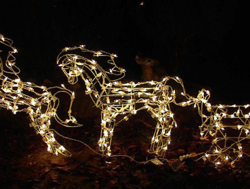 Christmas Lighted Horse Carriage Outdoor Decoration : Large lighted christmas two horses carriage yard