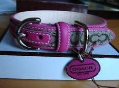 Small Coach Dog Collar