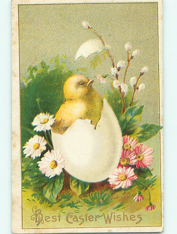Divided-Back easter CHICK BURSTS FROM EGG BY PINK FLOWERS v2646