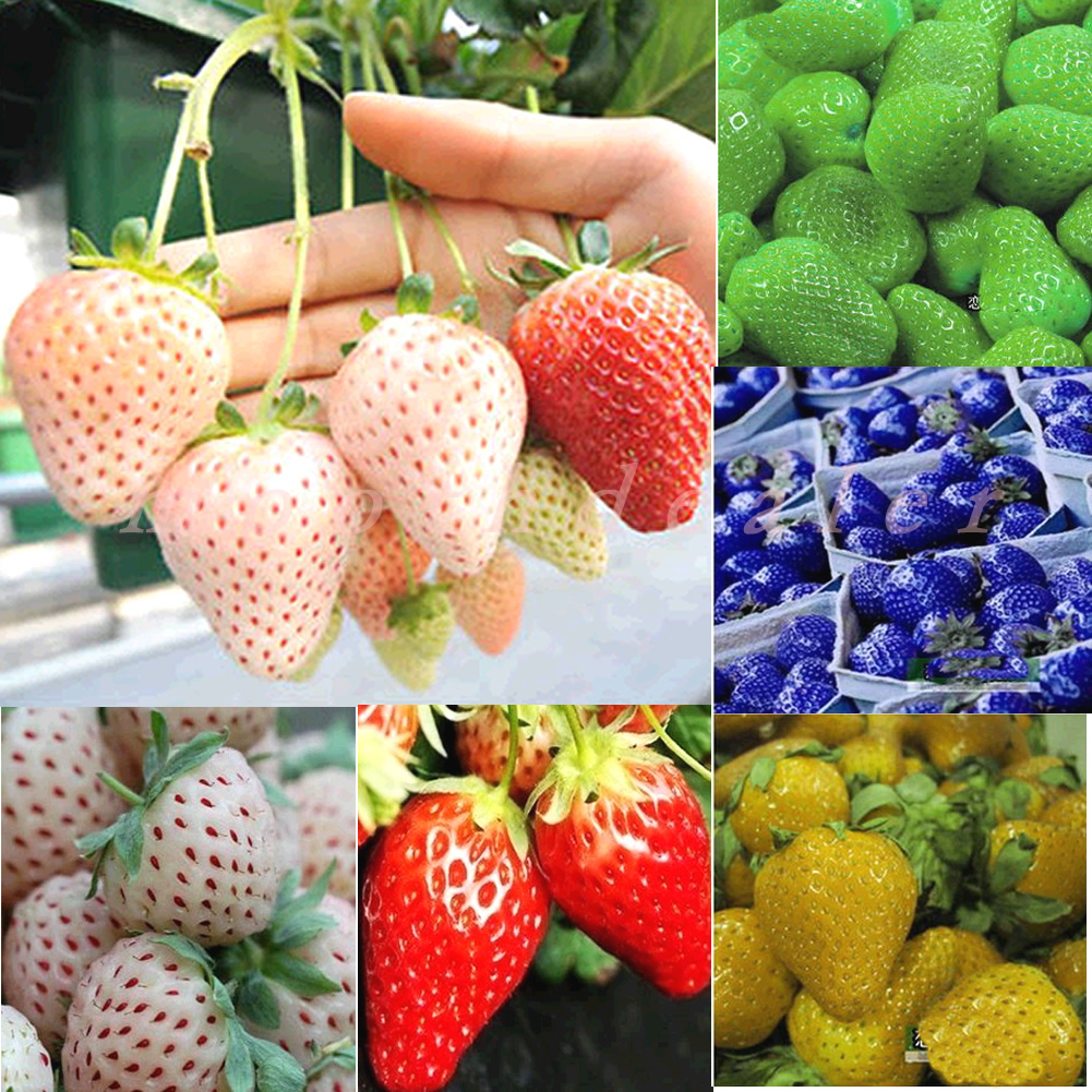 1Pack-Rare-Delicious-Strawberry-Seeds-Vegetables-Fruits-Seeds-New