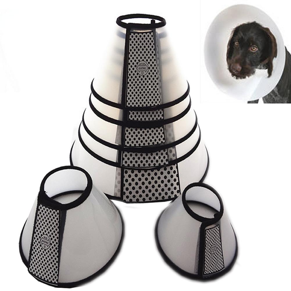 Fitting Elizabethan Collar Dog