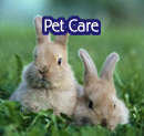 pet care