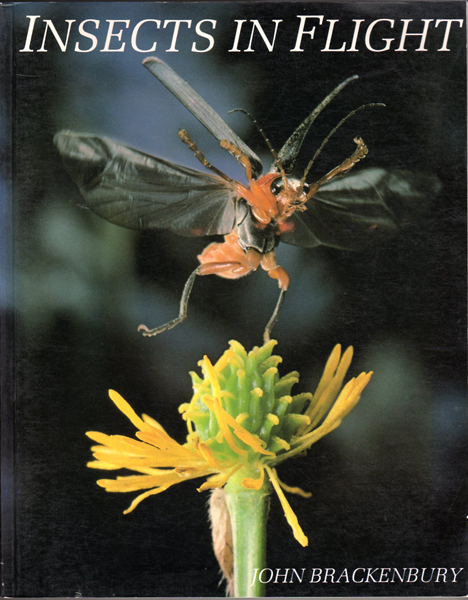 Thumbnail of Insects in Flight