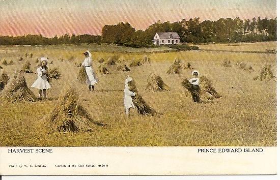 PEI Prince Edward Island ~ Farm Scene - Grain Bundling - Mother, Children - Canadian Souvenir Post Card - Warwick Bro's