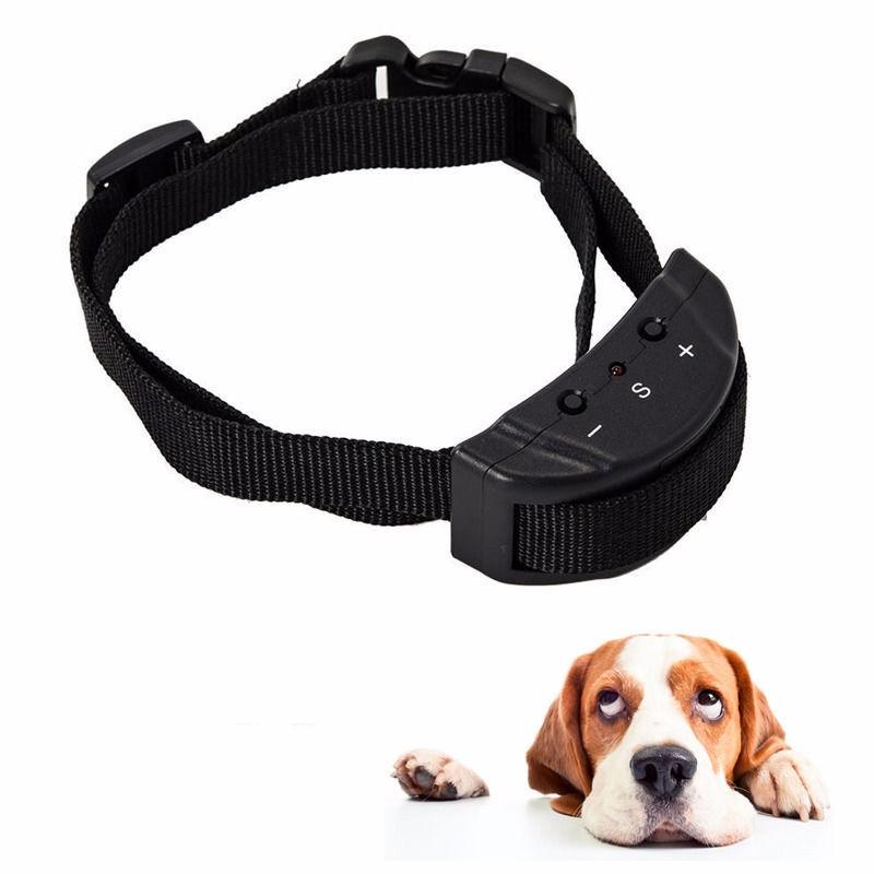Dog Shock Collar Human Test