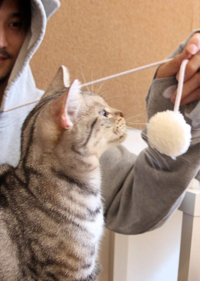 New Mewgaroo Nyangaroo Cat Dog Pet Unisex Kangaroo Coat Hoodie - Hoodie with kangaroo pouch is the perfect cat accessory
