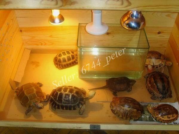 75w Reptile Ceramic Heat Emitter Heated Heater Heating Lamp Light 120v New Ebay