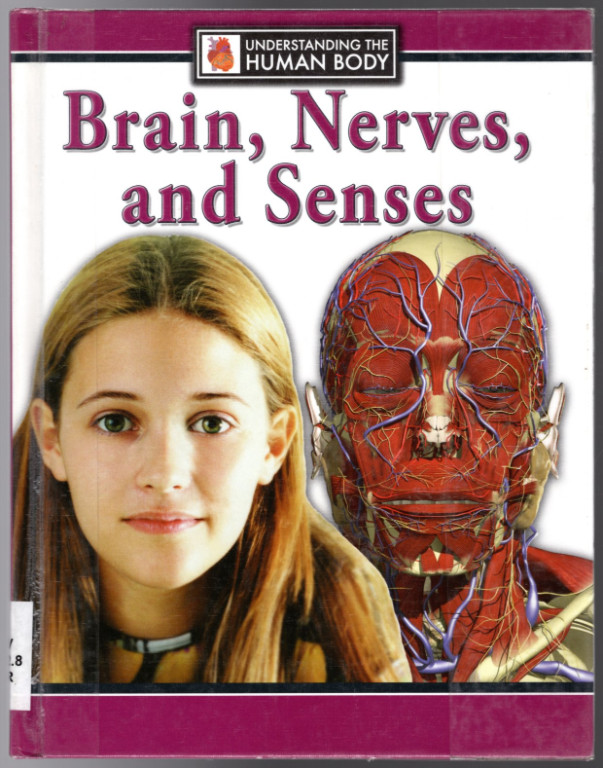 Image 0 of Brain, Nerves, and Senses (Understanding the Human Body)