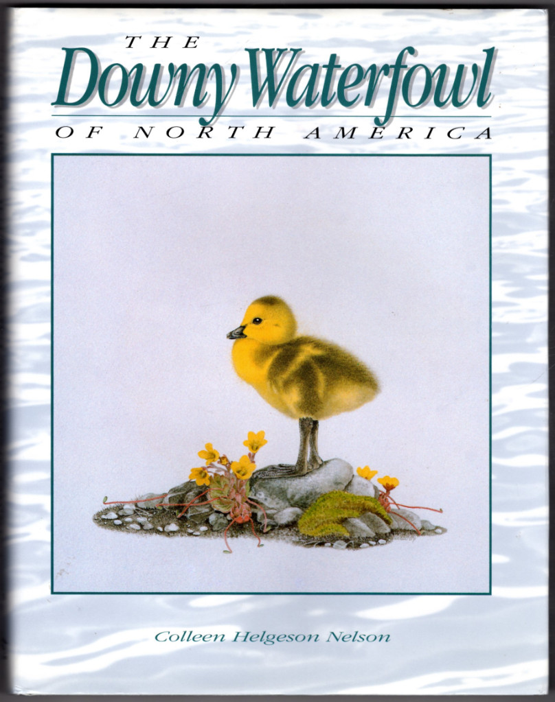 Image 0 of Downy Waterfowl of North America