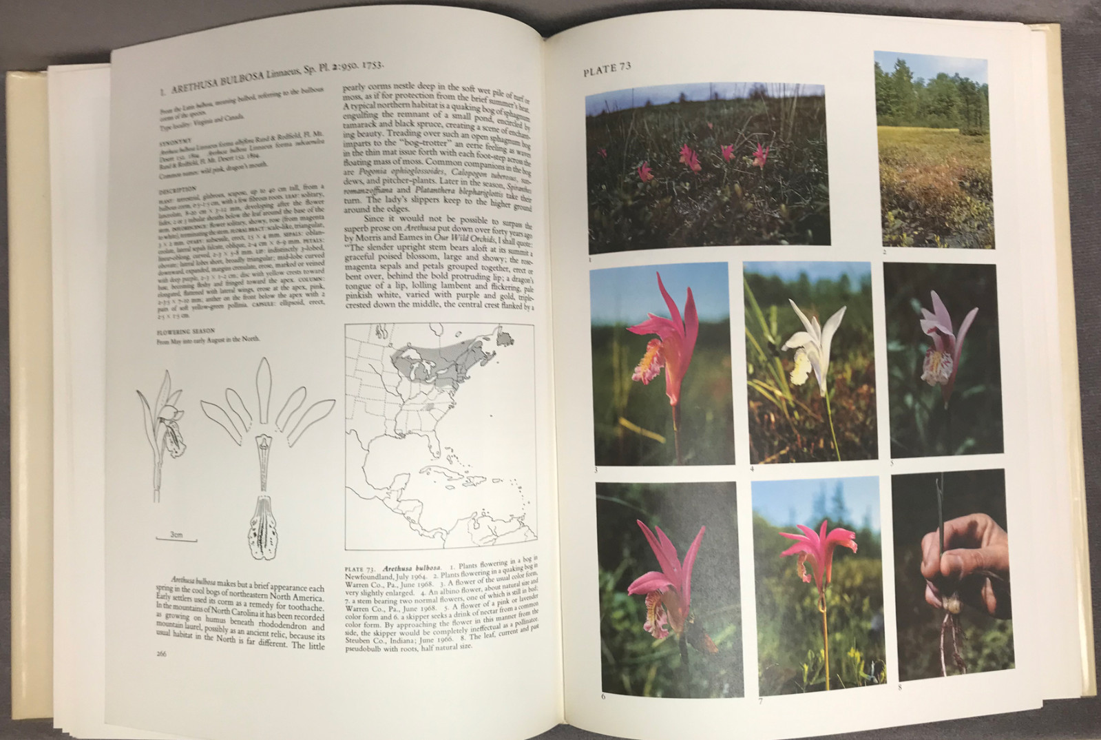 Image 2 of The Native Orchids of the United States and Canada Excluding Florida; and The Na